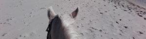 grey horse on Streedagh beach
