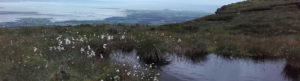 Bog weed on top of Benbulben