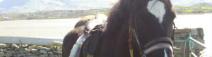 Black and White Horse Saddled Up ready for Heritage on Horseback Trail