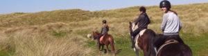 Riders on horseback walking towards beach