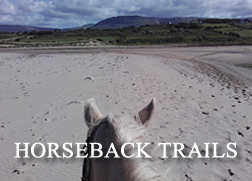 Grey horse on beach from rider's view