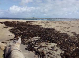Grey Horse on Trawalua Beach on Heritage on Horseback Trail