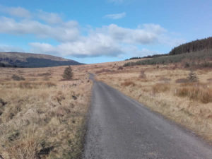 Bogland in the Ox Mountains