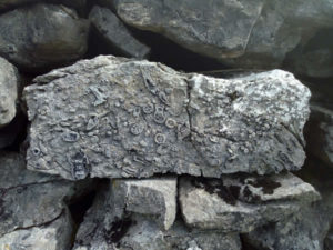 Coral Fossils Dating to 300 million years on Knocknarea Mountain in Sligo
