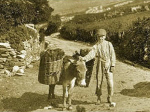 Boy leading donkey with basket of turf on its back