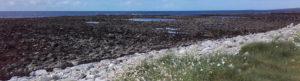 March Helborine along shore in Strandhill
