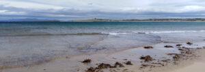 Kelp on Trawalua Strand